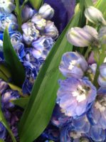 blue-blooms-1
